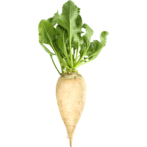 Sugar-Beets(Betaine)